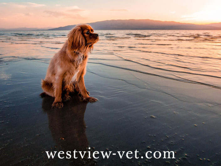 Westview Veterinary Hospital Website